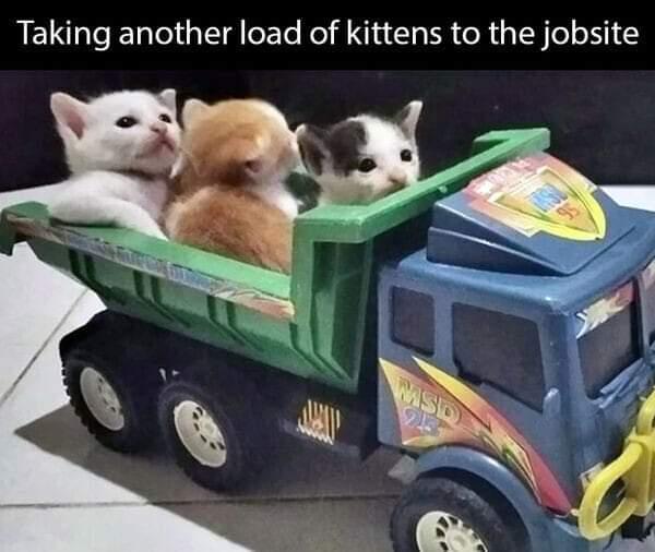Memes baby kittens