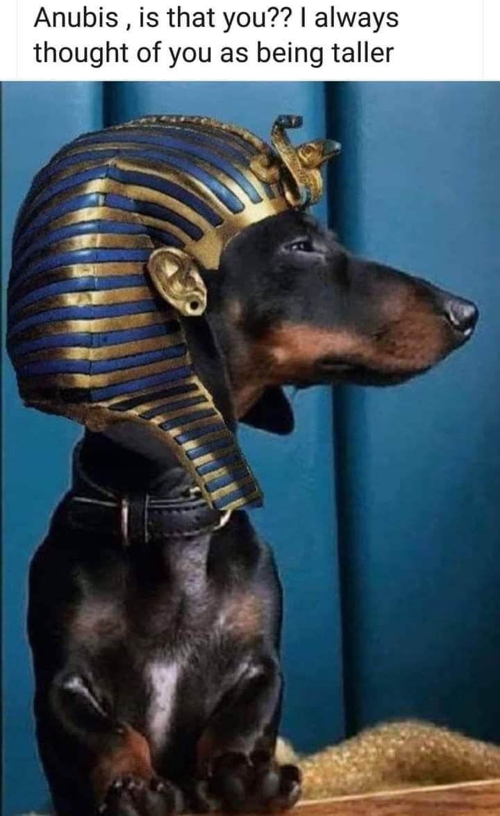 Memes Egyptian god Anubis