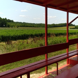 Produce field Beechwood farm Marietta south carolina