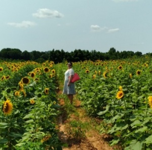 Sunflowers Beechwood farm Marietta south carolina