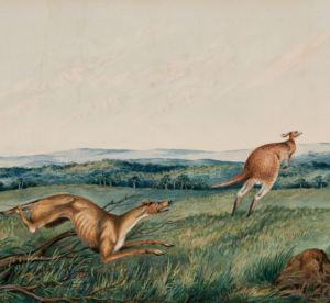 Kangaroo fun facts