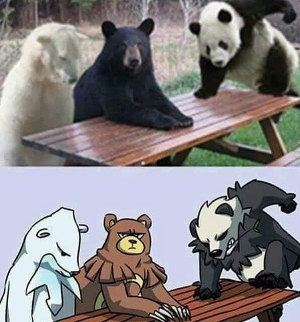 Memes pokemon bears