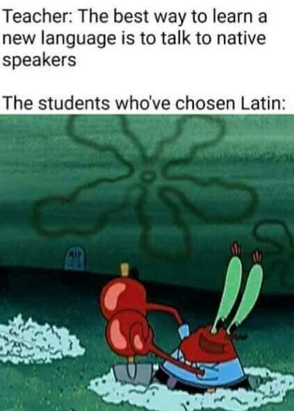 Memes learning Latin