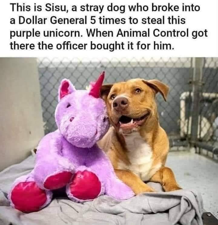Memes stray dog purple unicorn