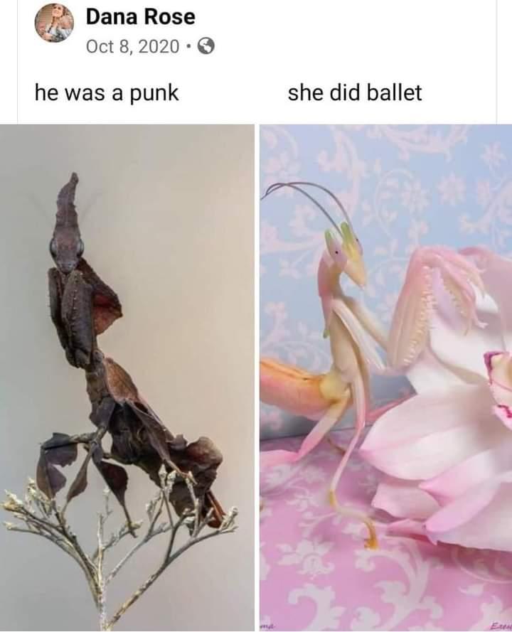 Memes Avril Lavigne Skater Boy
