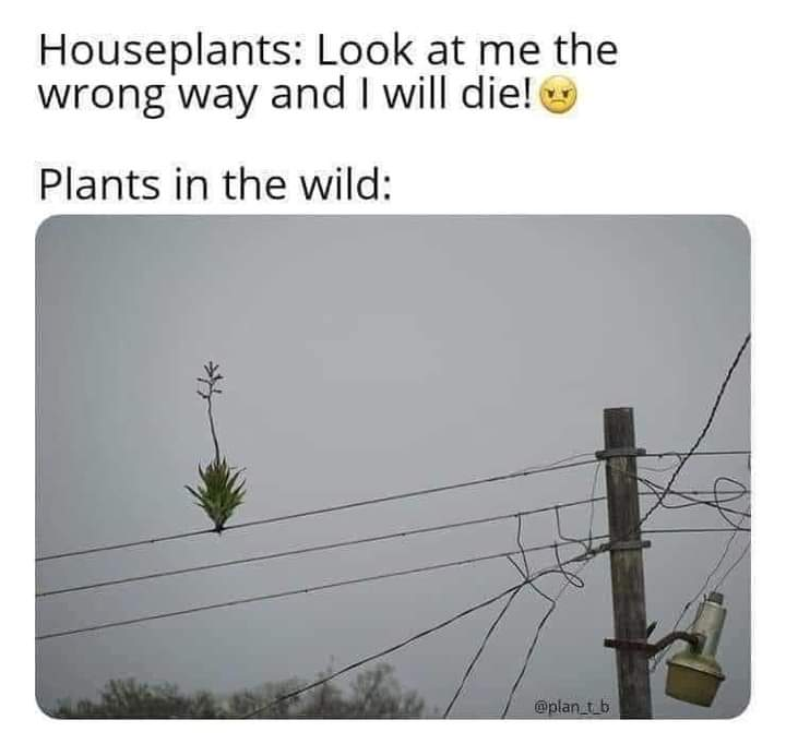 Memes plants growing anywhere