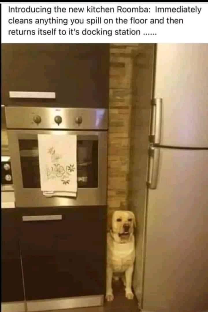 Memes dog roomba
