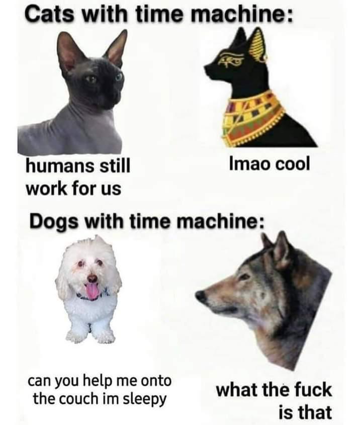 Memes dogs vs cats