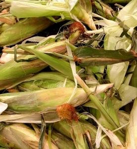 Corn fun facts