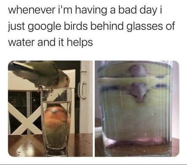 Memes birds behind glasses