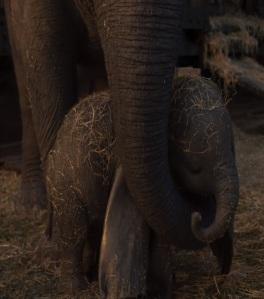Dumbo is born Dumbo 2019 movie Disney