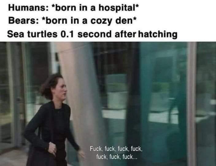 Memes sea turtle babies
