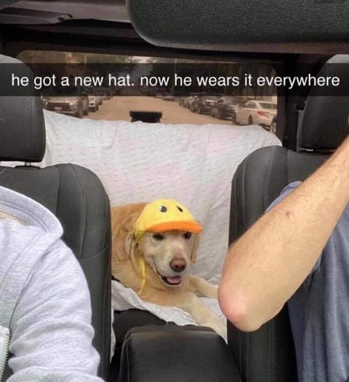 Memes dog with new hat