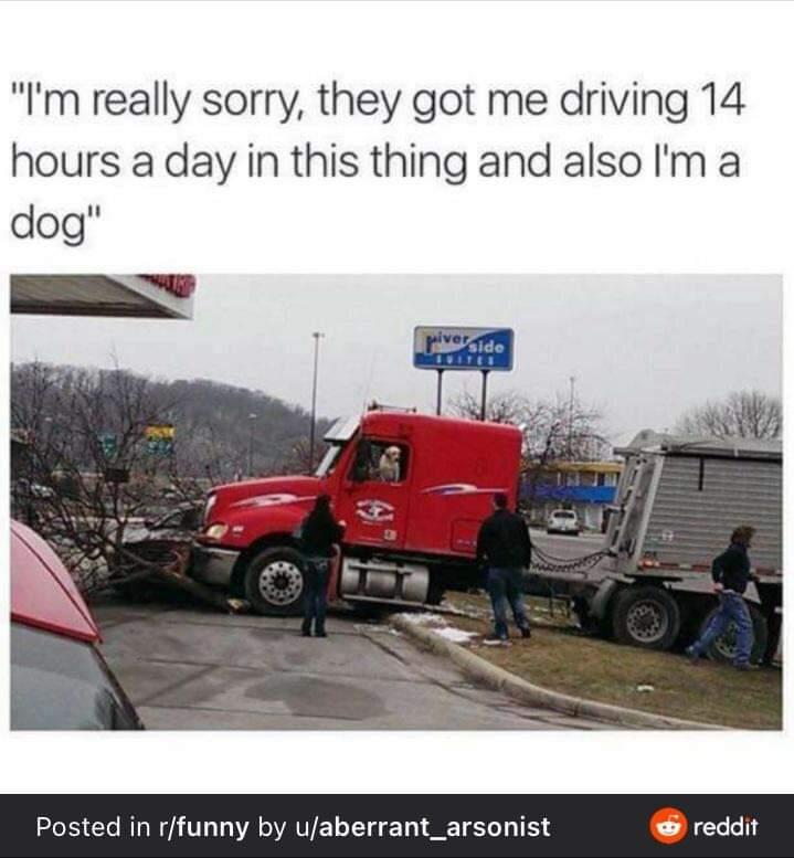 Memes dog driving truck