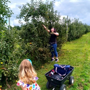 Picking apples Justus Orchard Hendersonville NC