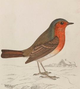 Fun facts about robins