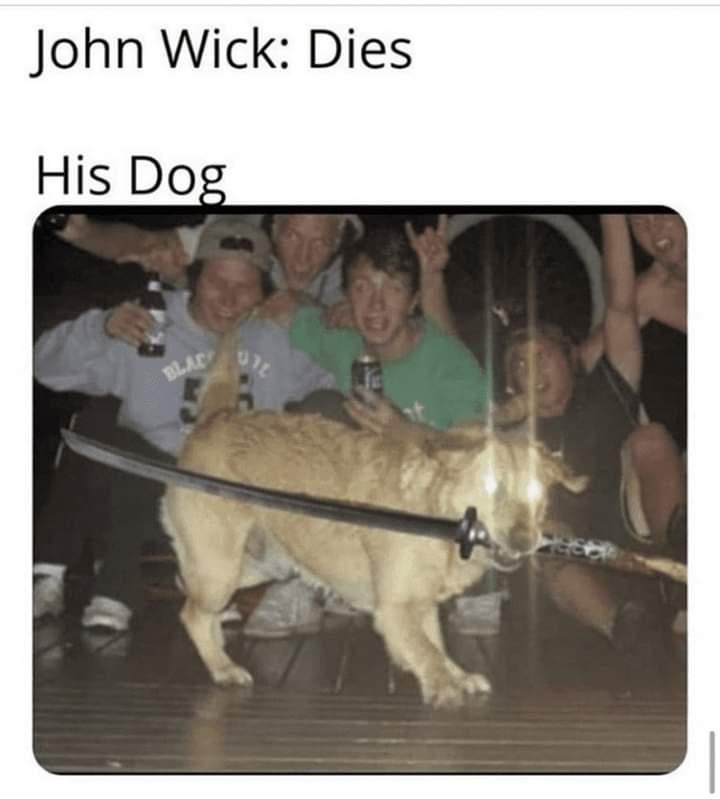 Memes dog avenging john wick