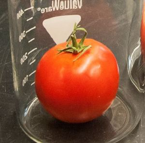 Fun facts about tomatoes