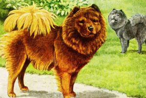 Fun facts about chow chow dogs