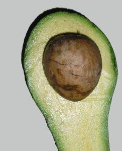 Fun facts about avocados